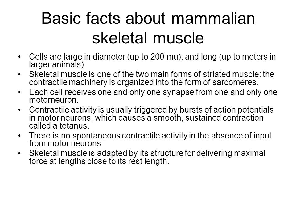 Basic facts about mammalian skeletal muscle
