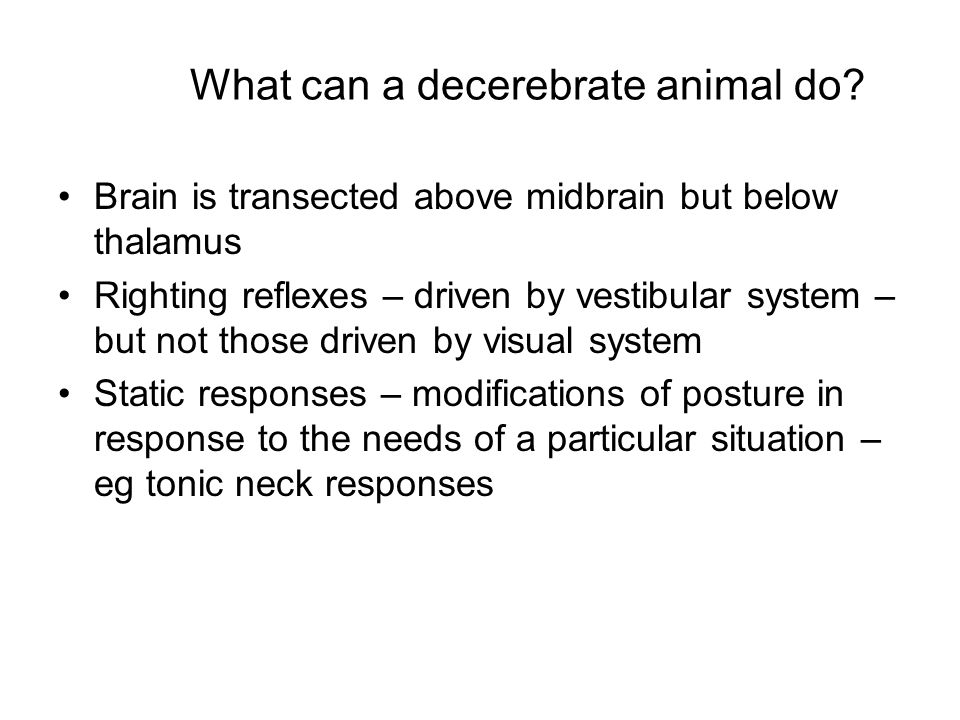 What can a decerebrate animal do