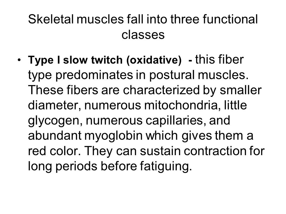 Skeletal muscles fall into three functional classes
