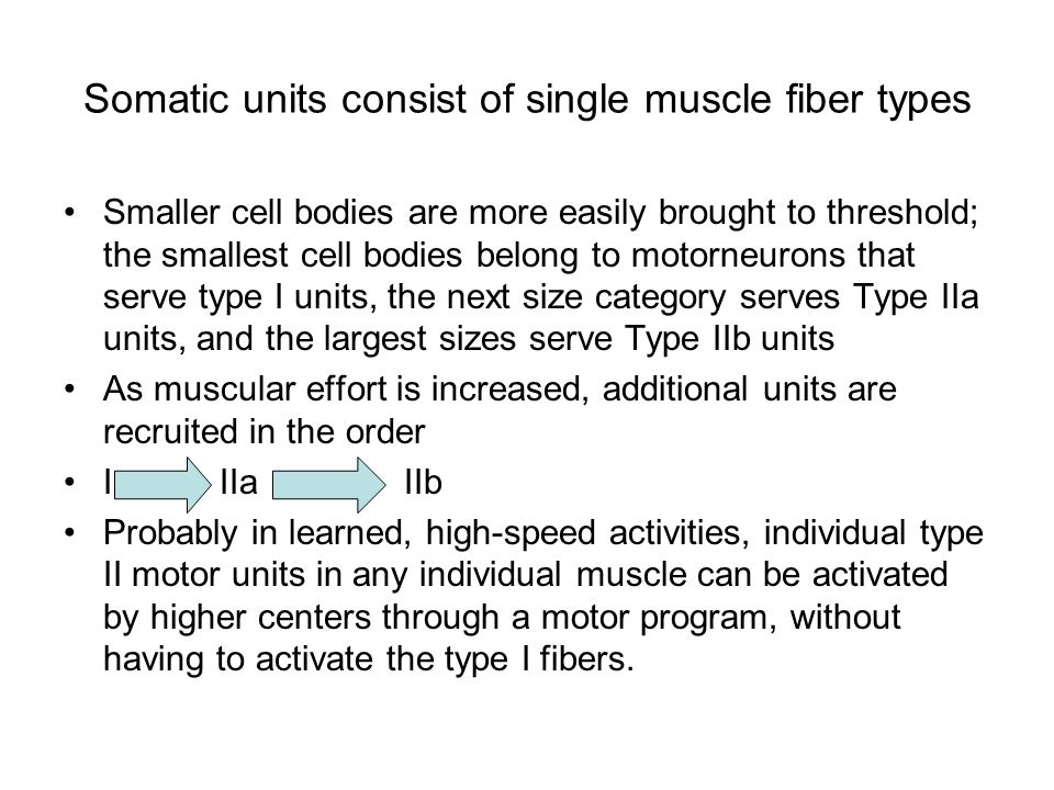 Somatic units consist of single muscle fiber types