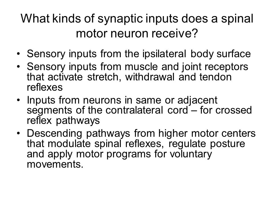 What kinds of synaptic inputs does a spinal motor neuron receive