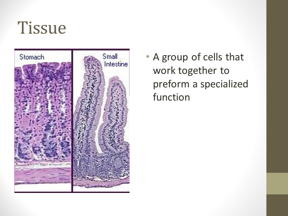 Tissue A group of cells that work together to preform a specialized function