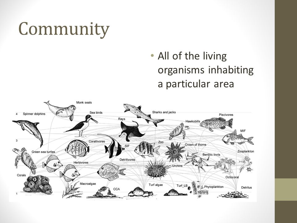 Community All of the living organisms inhabiting a particular area
