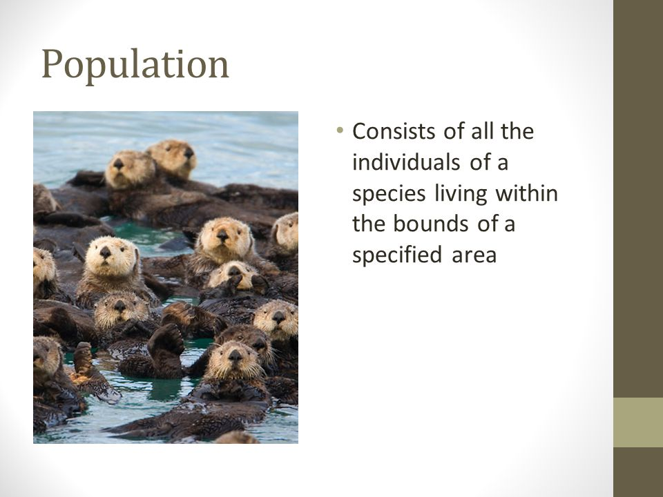Population Consists of all the individuals of a species living within the bounds of a specified area.