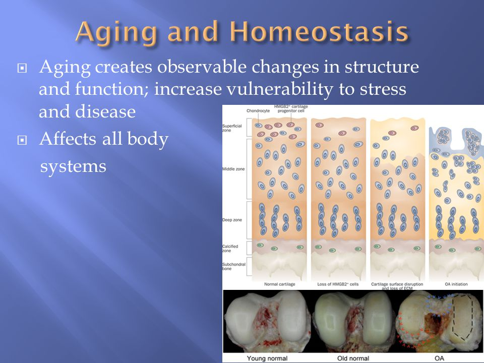 Aging and Homeostasis Aging creates observable changes in structure and function; increase vulnerability to stress and disease.