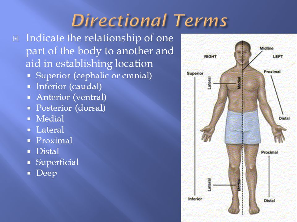 Directional Terms Indicate the relationship of one