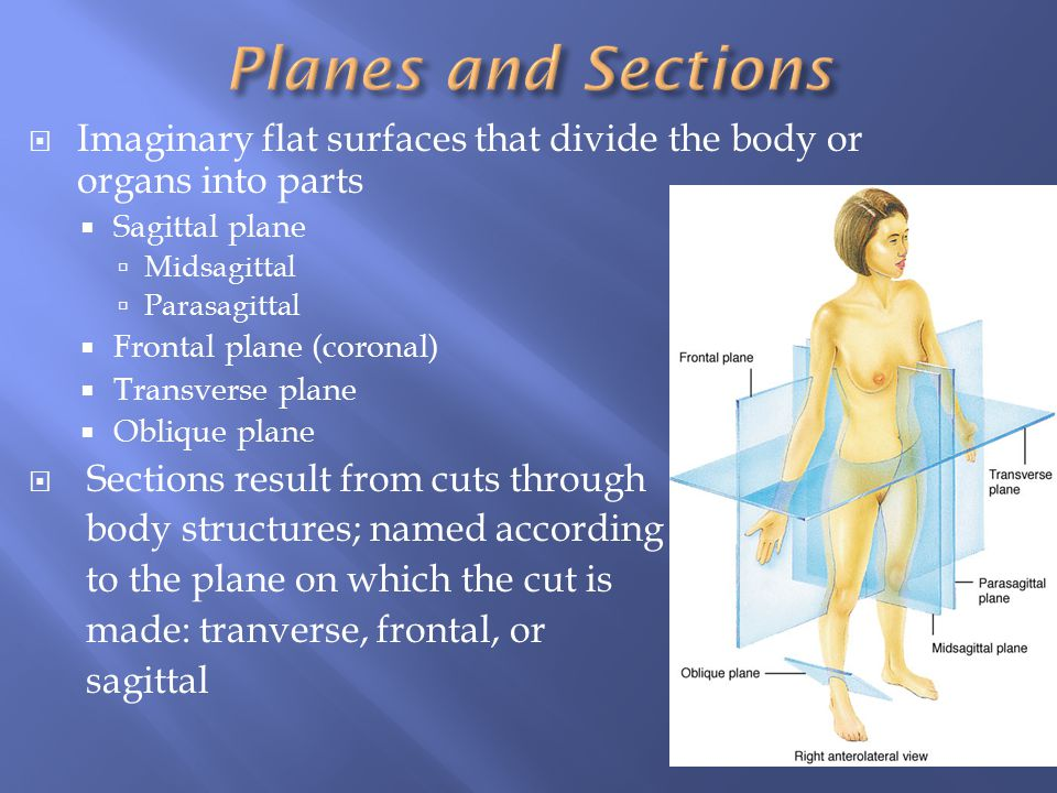 Planes and Sections Imaginary flat surfaces that divide the body or organs into parts. Sagittal plane.