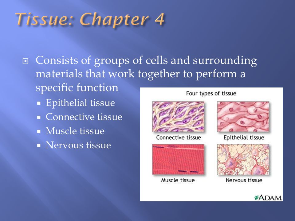Tissue: Chapter 4 Consists of groups of cells and surrounding materials that work together to perform a specific function.