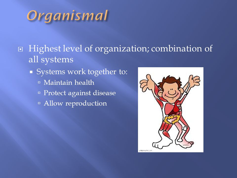 Organismal Highest level of organization; combination of all systems