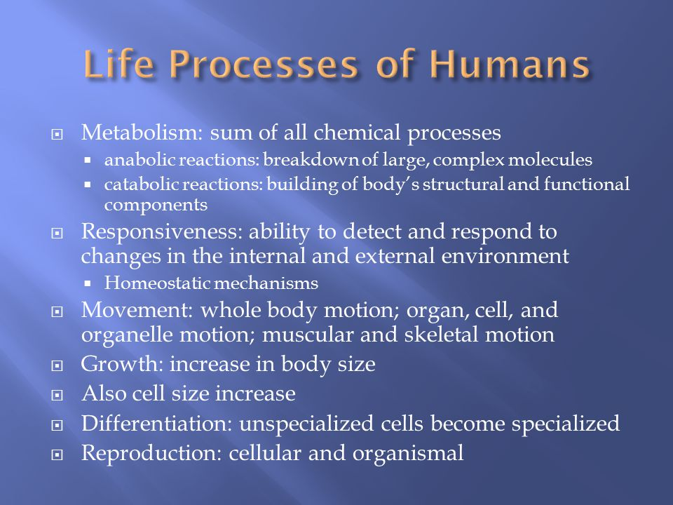 Life Processes of Humans