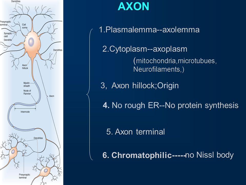 AXON 1.Plasmalemma--axolemma 2.Cytoplasm--axoplasm