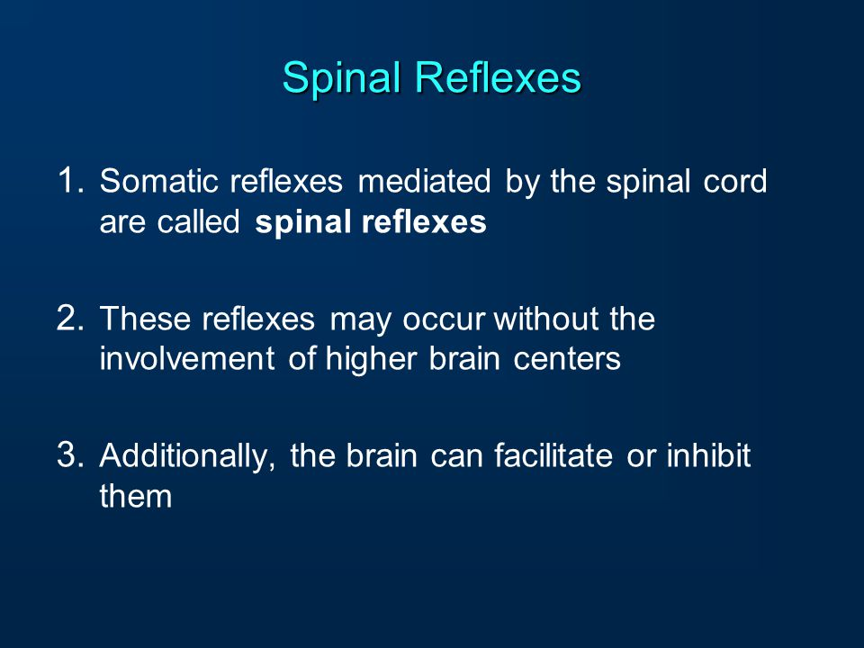 Spinal Reflexes Somatic reflexes mediated by the spinal cord are called spinal reflexes.