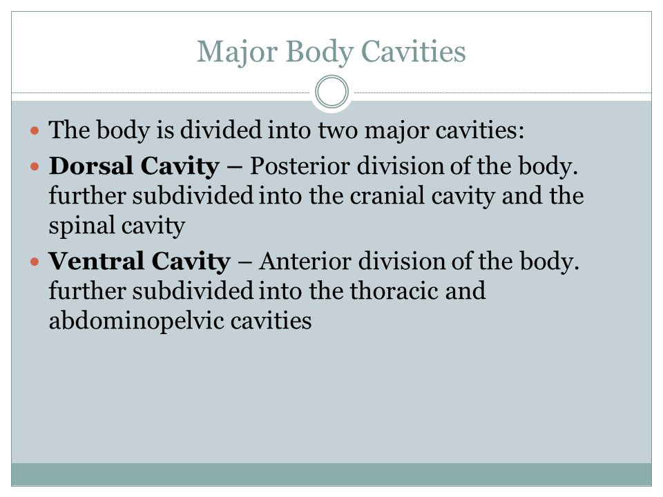 Major Body Cavities The body is divided into two major cavities: