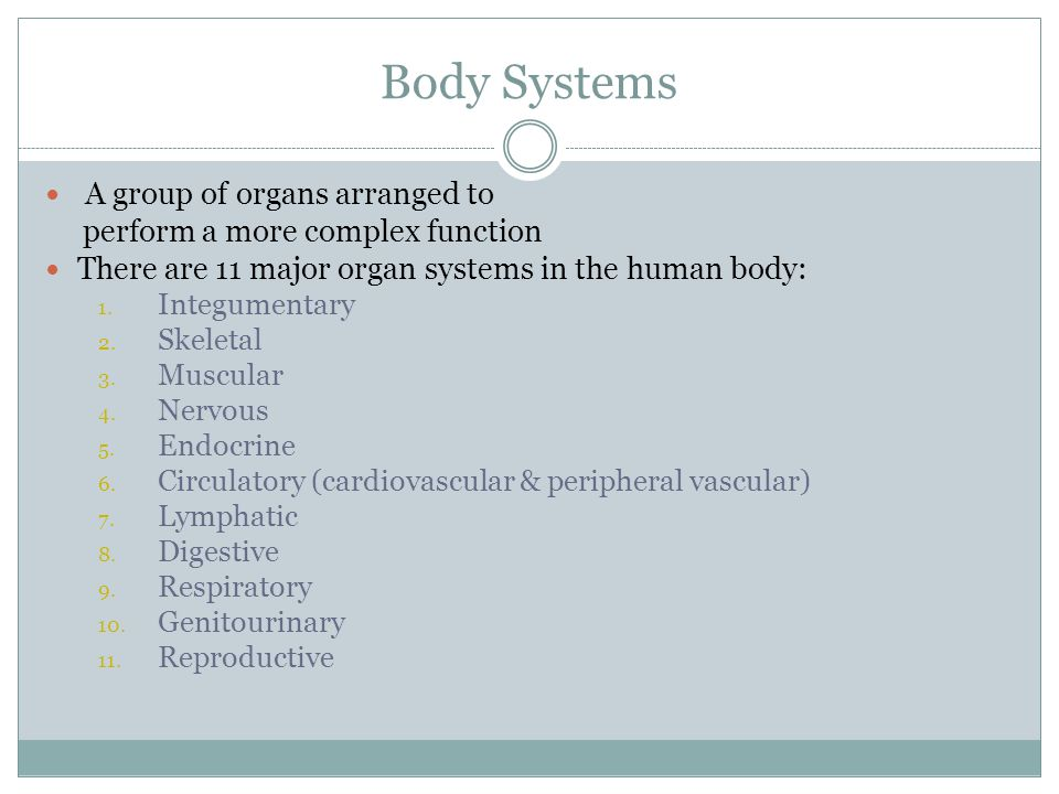 Body Systems A group of organs arranged to
