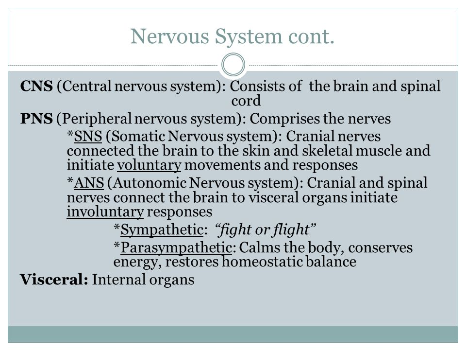 Nervous System cont. CNS (Central nervous system): Consists of the brain and spinal cord.