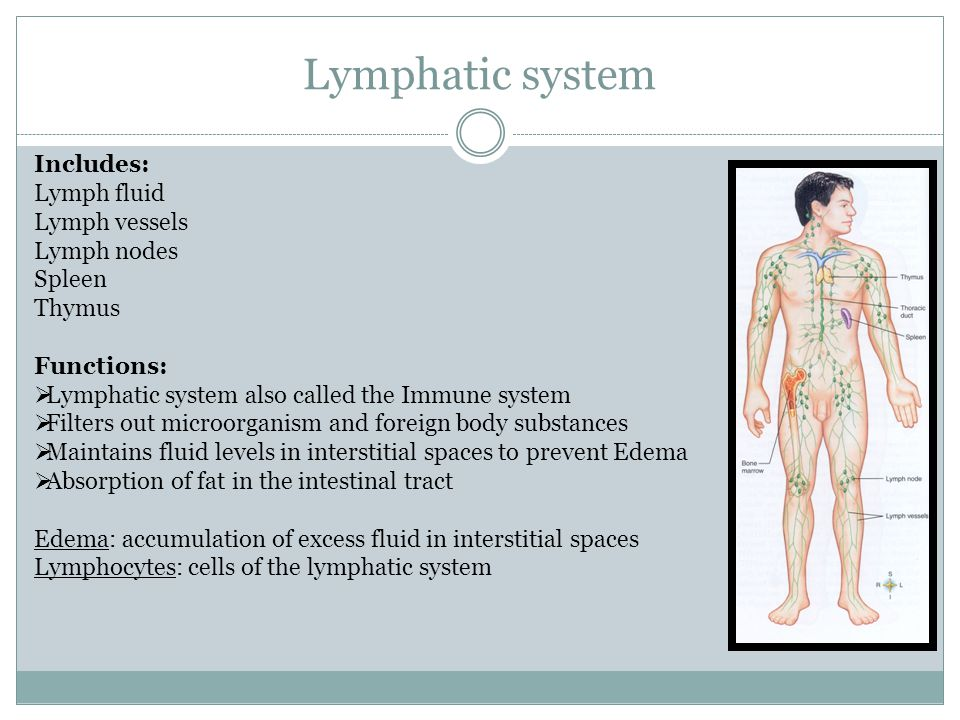 Lymphatic system Includes: Lymph fluid Lymph vessels Lymph nodes
