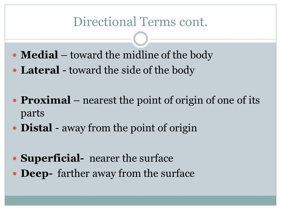 Directional Terms cont.