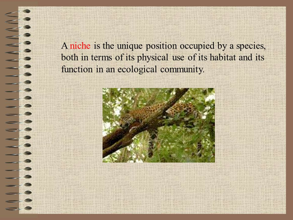 A niche is the unique position occupied by a species,
