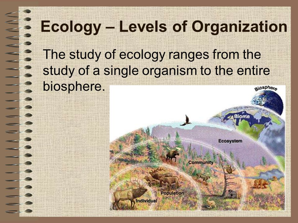 Ecology – Levels of Organization