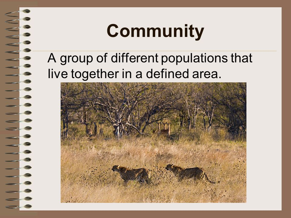 Community A group of different populations that live together in a defined area.