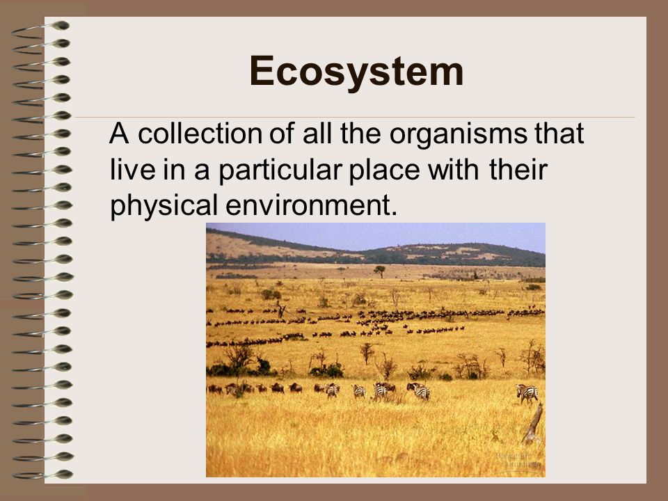 Ecosystem A collection of all the organisms that live in a particular place with their physical environment.