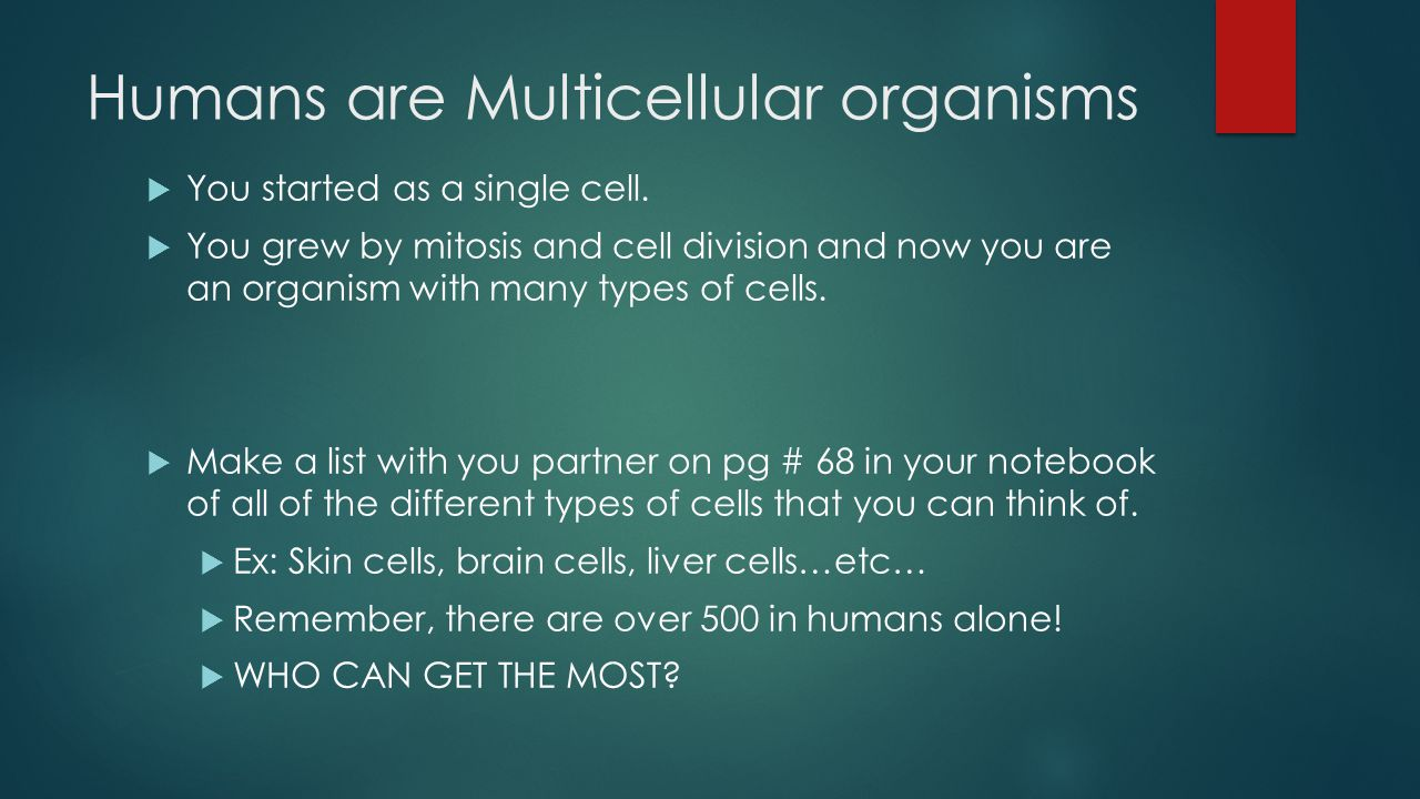 Humans are Multicellular organisms