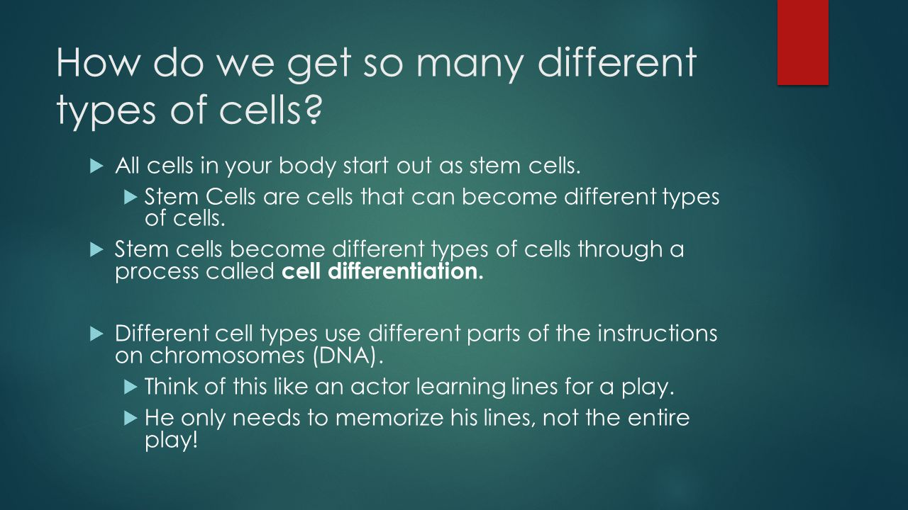 How do we get so many different types of cells