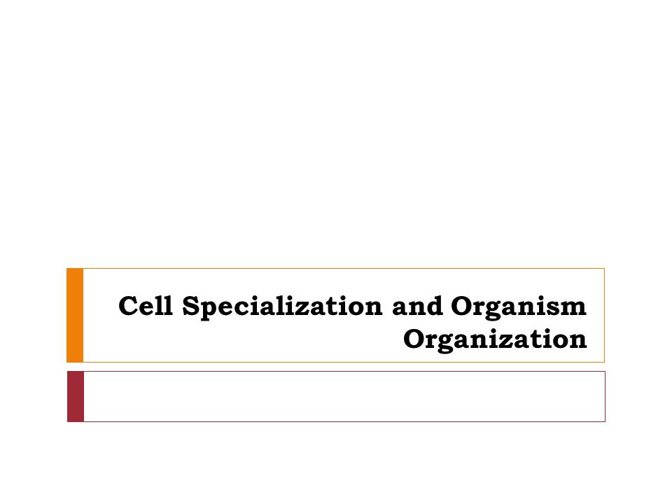 Cell Specialization and Organism Organization