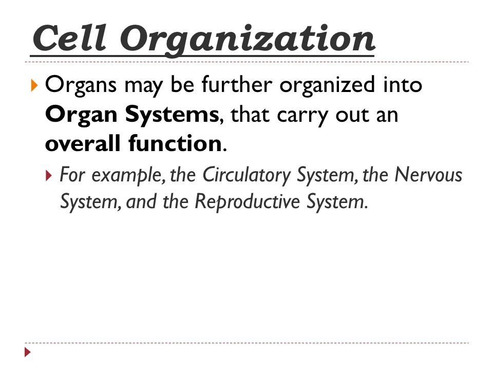 Cell Organization Organs may be further organized into Organ Systems, that carry out an overall function.