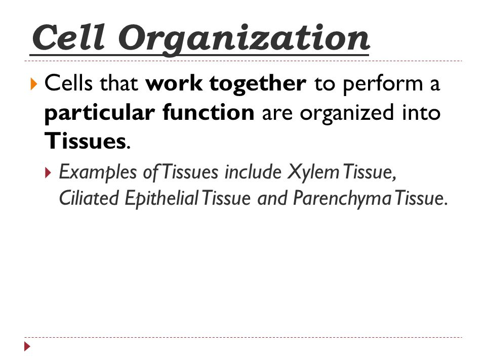 Cell Organization Cells that work together to perform a particular function are organized into Tissues.