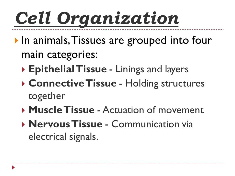 Cell Organization In animals, Tissues are grouped into four main categories: Epithelial Tissue - Linings and layers.