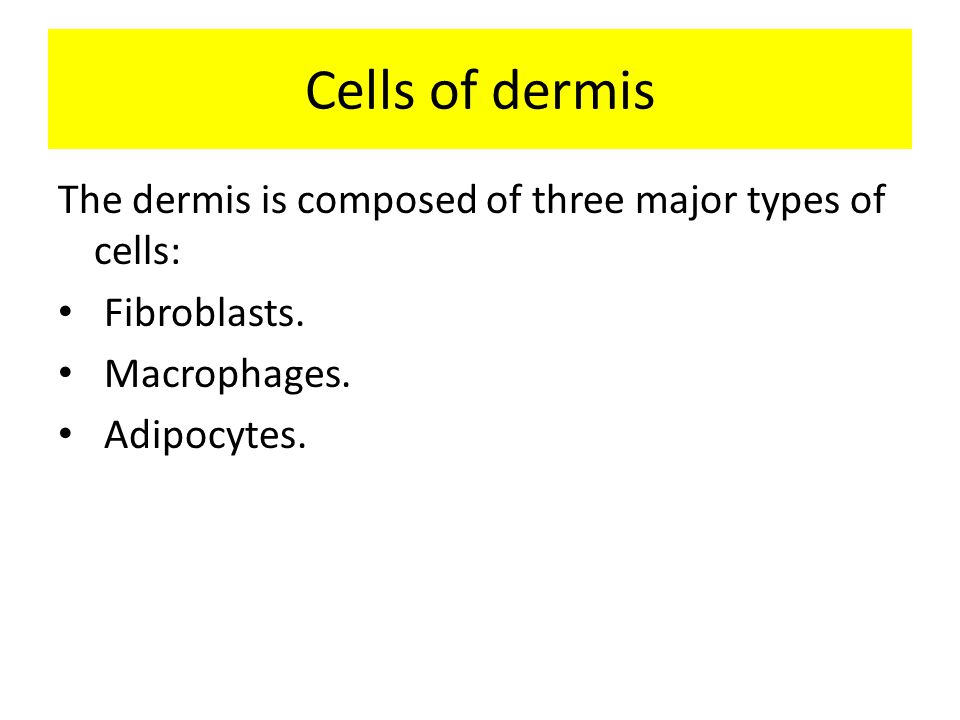 Cells of dermis The dermis is composed of three major types of cells: