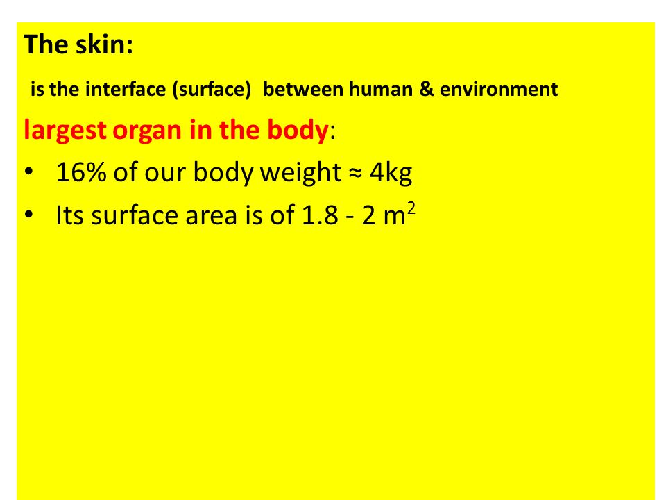 The skin: is the interface (surface) between human & environment. largest organ in the body: 16% of our body weight ≈ 4kg.