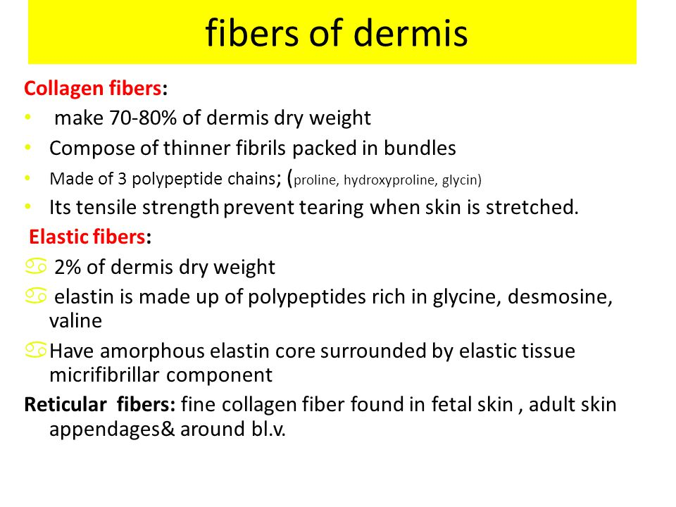 fibers of dermis Collagen fibers: make 70-80% of dermis dry weight