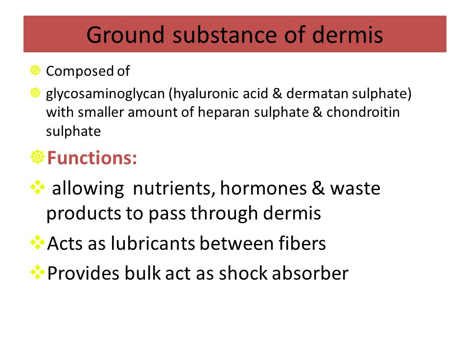 Ground substance of dermis