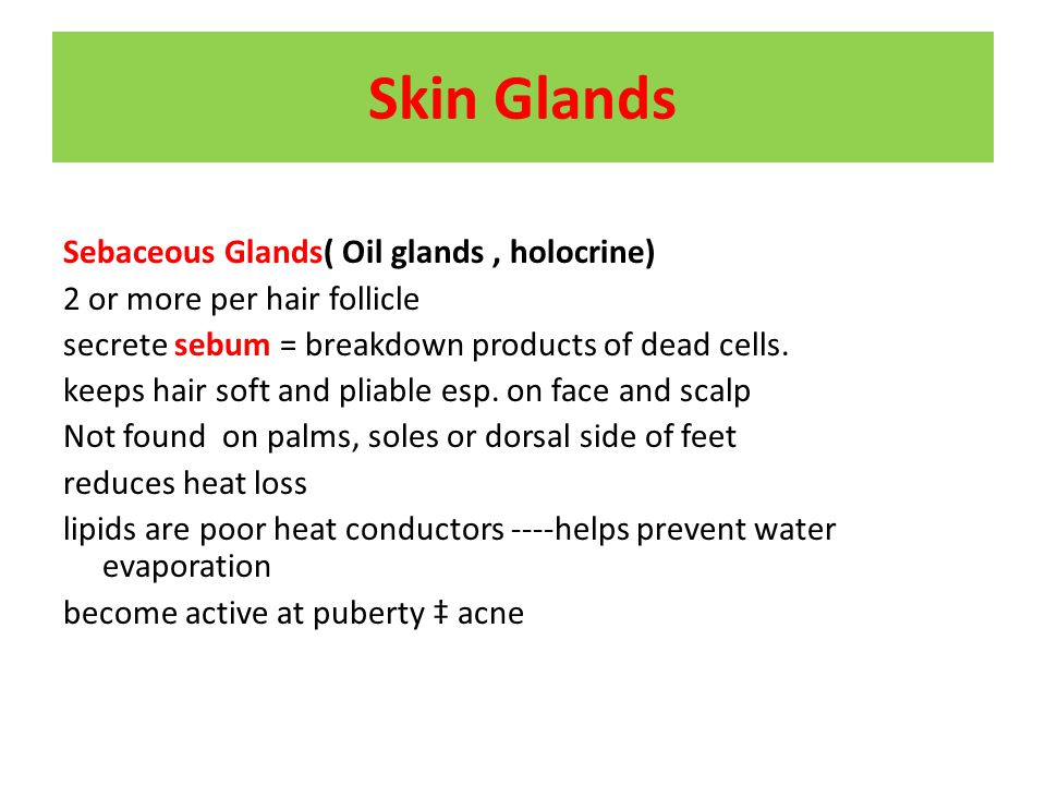 Skin Glands Sebaceous Glands( Oil glands , holocrine)