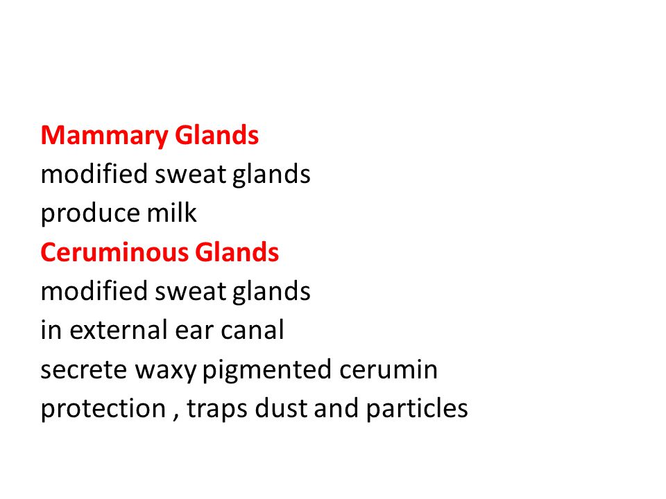 Mammary Glands modified sweat glands. produce milk. Ceruminous Glands. in external ear canal. secrete waxy pigmented cerumin.