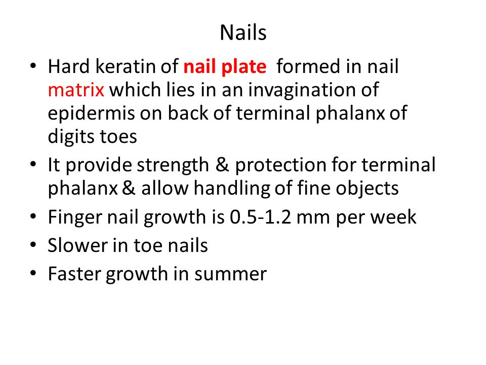 Nails Hard keratin of nail plate formed in nail matrix which lies in an invagination of epidermis on back of terminal phalanx of digits toes.