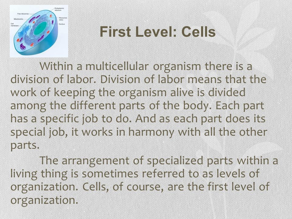 First Level: Cells