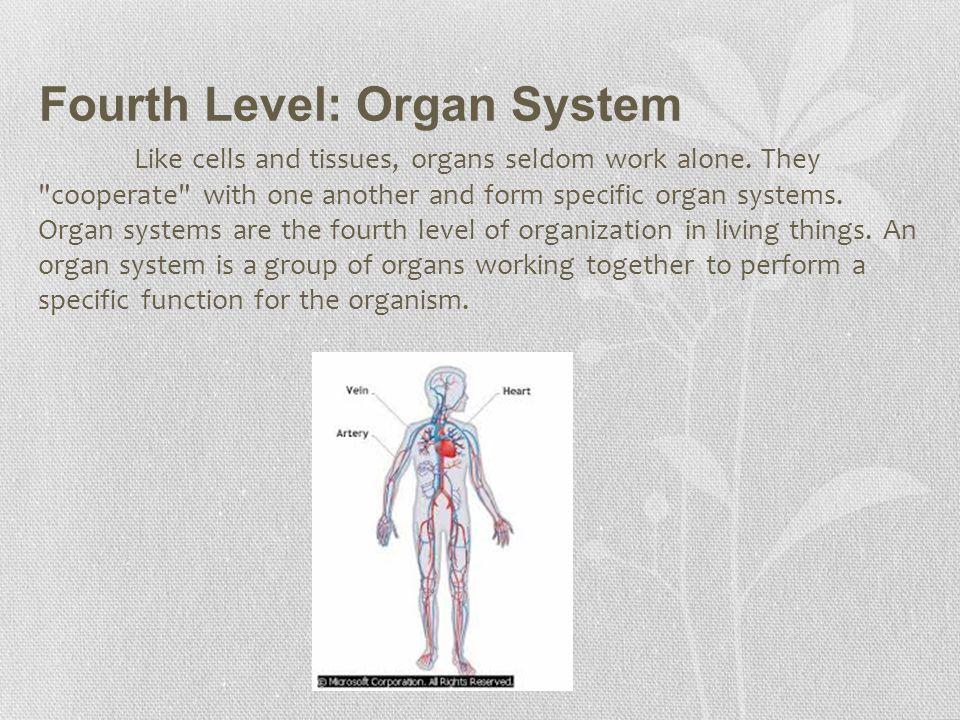 Fourth Level: Organ System