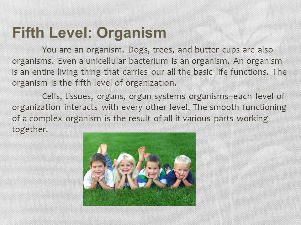 Fifth Level: Organism