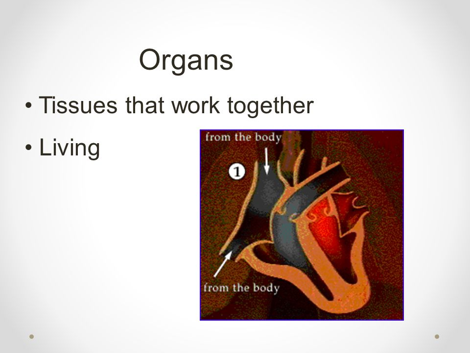 Organs Tissues that work together Living