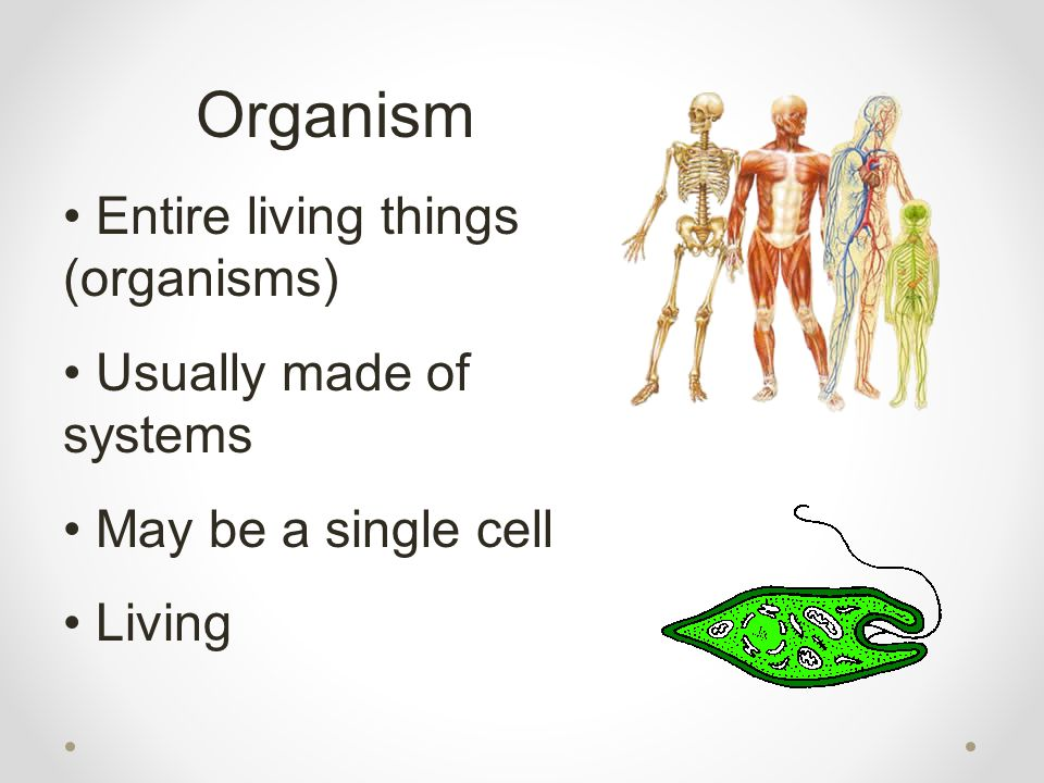 Organism Entire living things (organisms) Usually made of systems