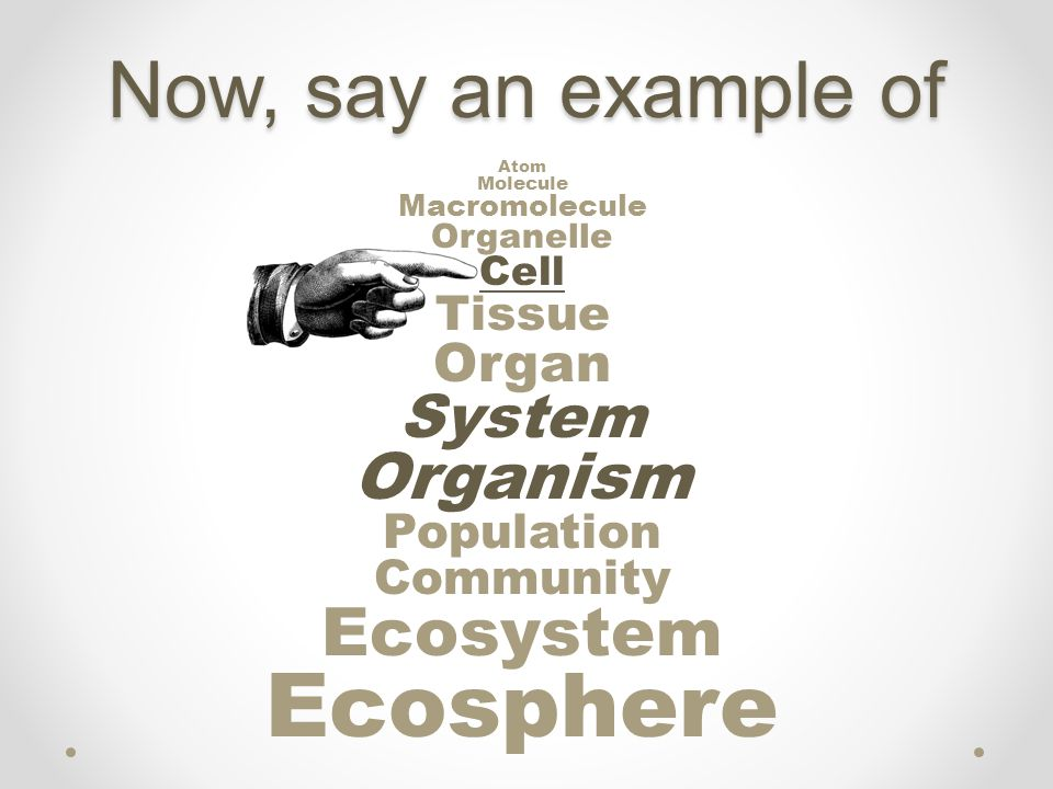 Ecosphere Now, say an example of Ecosystem Organism System Organ