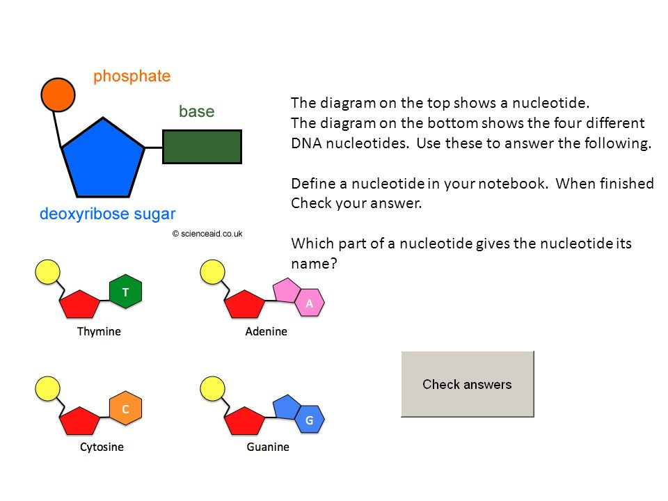 The diagram on the top shows a nucleotide.