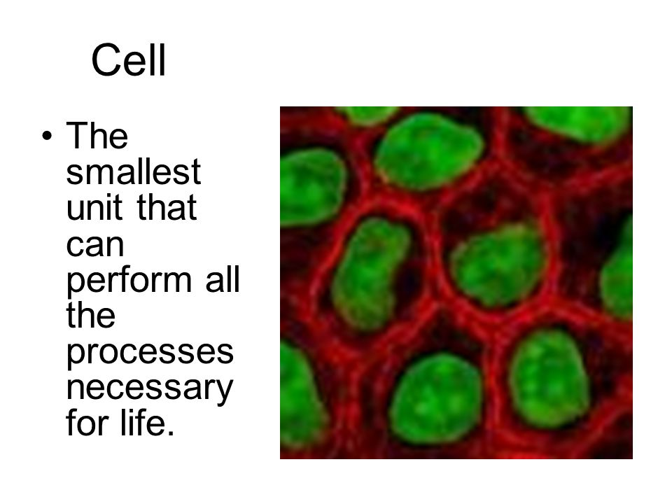 Cell The smallest unit that can perform all the processes necessary for life.