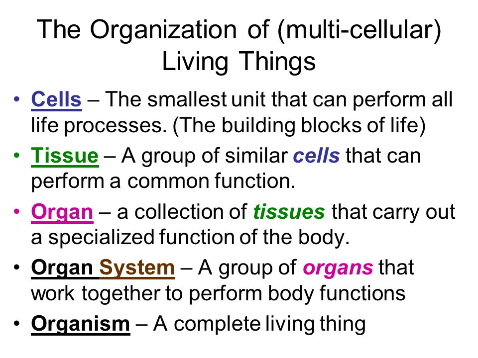 The Organization of (multi-cellular) Living Things