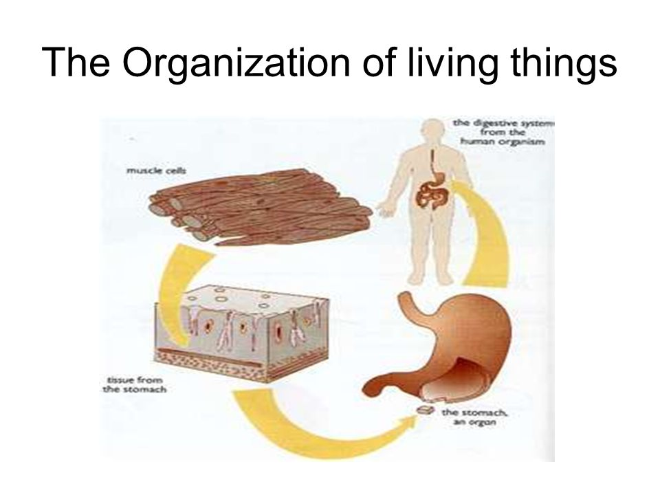 The Organization of living things