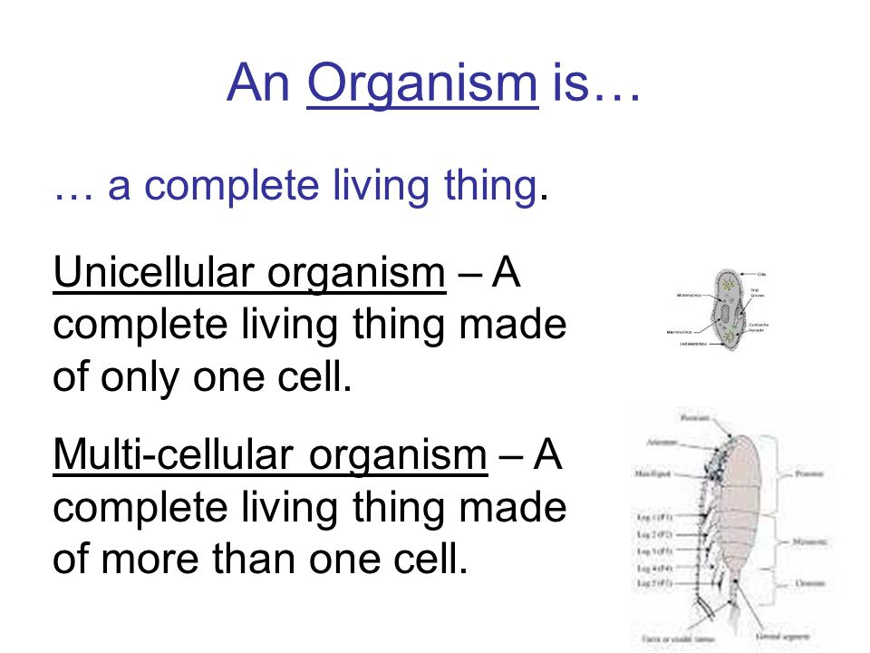 An Organism is… … a complete living thing.