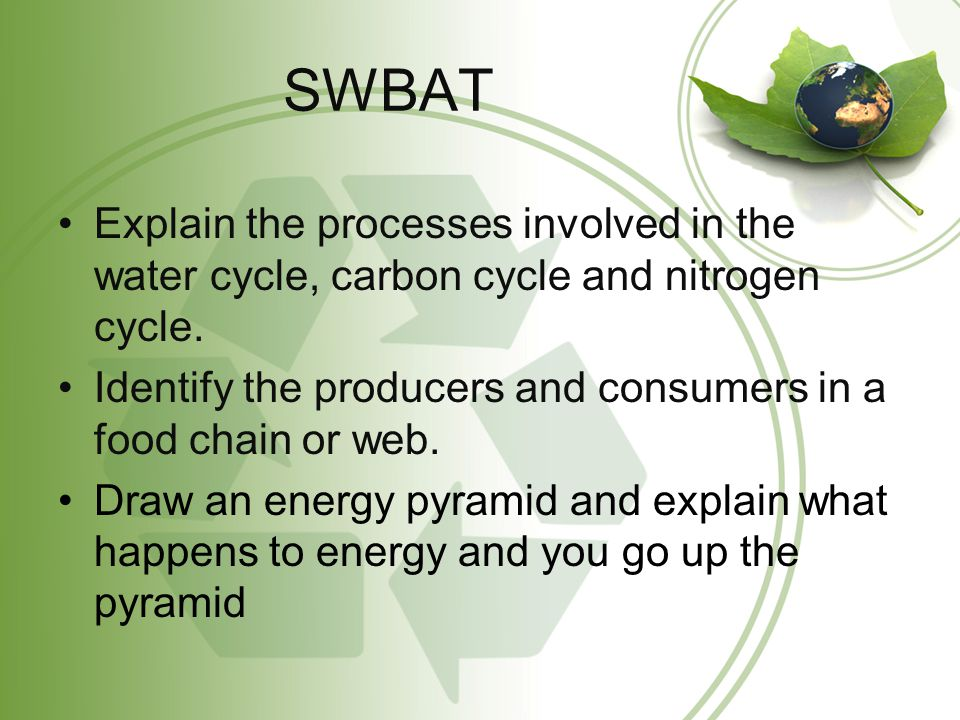 SWBAT Explain the processes involved in the water cycle, carbon cycle and nitrogen cycle.